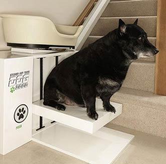 monte escalier chien